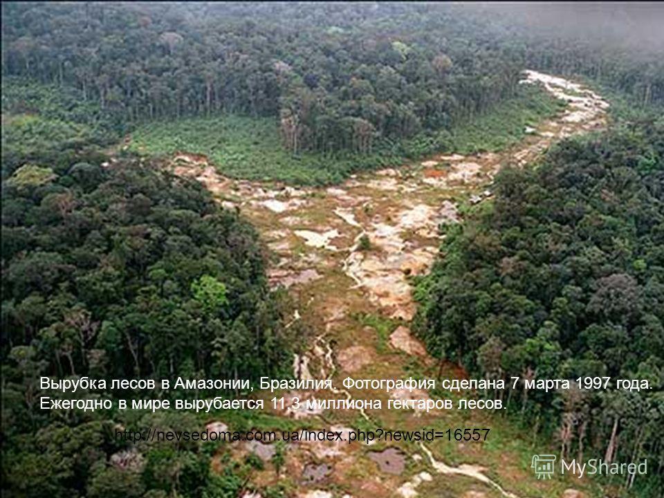 Вырубка лесов в Амазонии, Бразилия. Фотография сделана 7 марта 1997 года. Ежегодно в мире вырубается 11,3 миллиона гектаров лесов. http://nevsedoma.com.ua/index.php?newsid=16557
