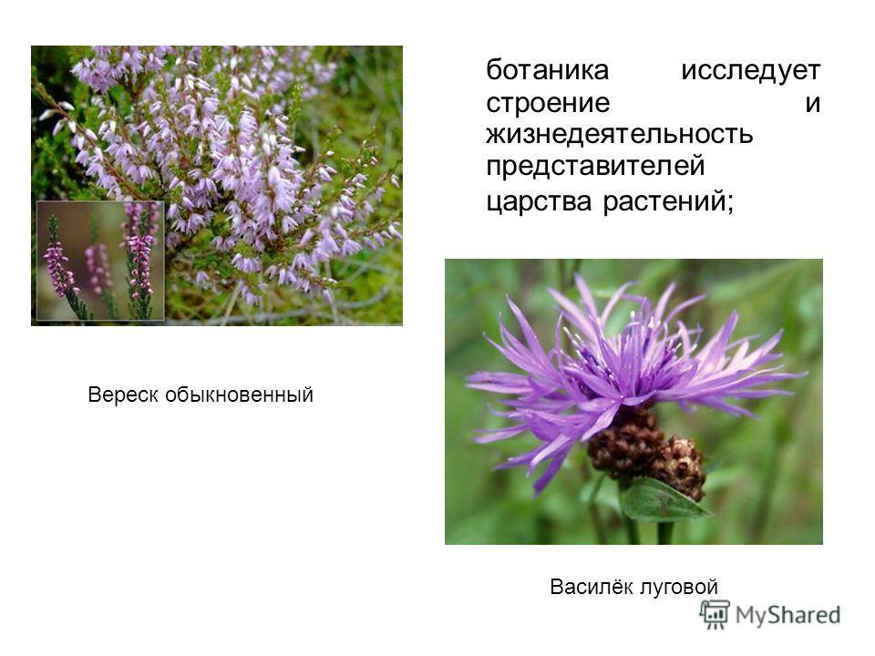 ботаника исследует строение и жизнедеятельность представителей царства растений; Вереск обыкновенный Василёк луговой