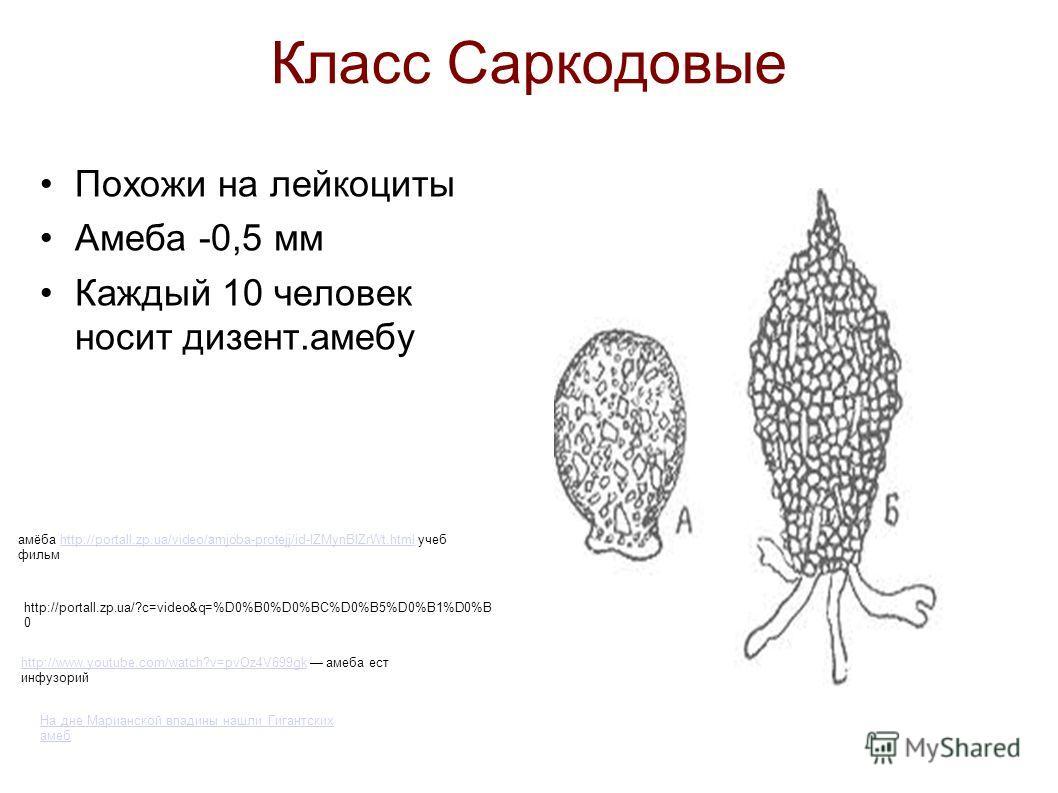 Класс Саркодовые Похожи на лейкоциты Амеба -0,5 мм Каждый 10 человек носит дизент.амебу http://www.youtube.com/watch?v=pvOz4V699gkhttp://www.youtube.com/watch?v=pvOz4V699gk амеба ест инфузорий На дне Марианской впадины нашли Гигантских амеб http://po
