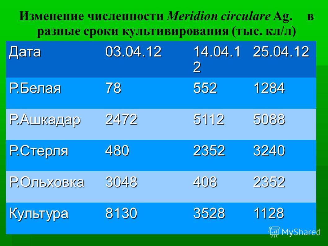 Изменение численности Meridion circulare Ag. в разные сроки культивирования (тыс. кл/л) Дата03.04.12 14.04.1 2 25.04.12 Р.Белая785521284 Р.Ашкадар247251125088 Р.Стерля48023523240 Р.Ольховка30484082352 Культура813035281128