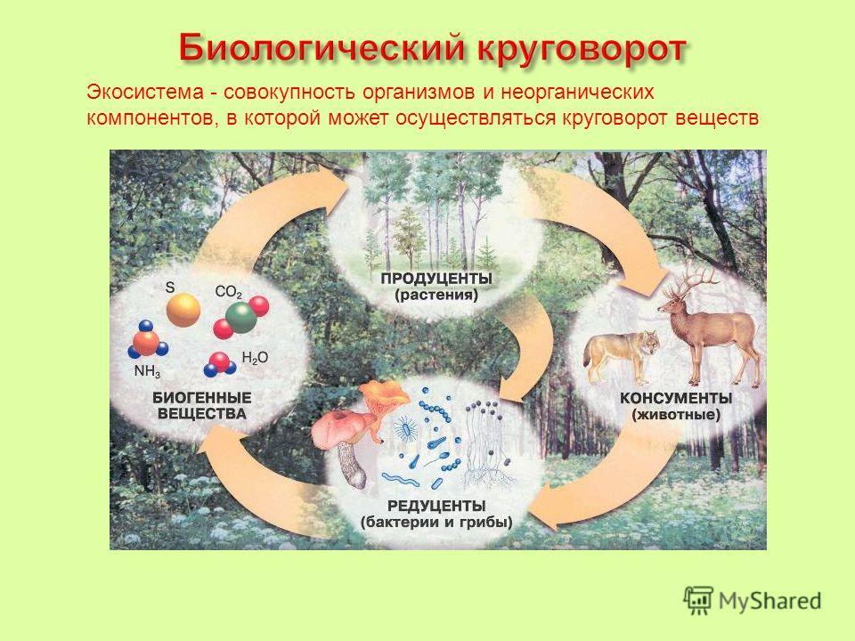 Экосистема - совокупность организмов и неорганических компонентов, в которой может осуществляться круговорот веществ
