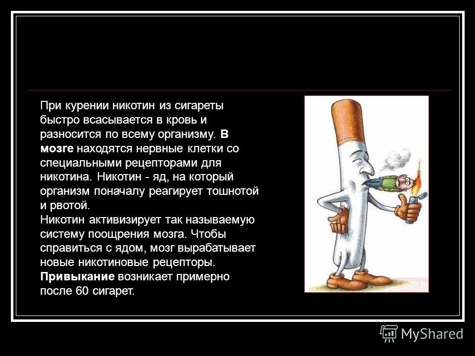 При курении никотин из сигареты быстро всасывается в кровь и разносится по всему организму. В мозге находятся нервные клетки со специальными рецепторами для никотина. Никотин - яд, на который организм поначалу реагирует тошнотой и рвотой. Никотин акт