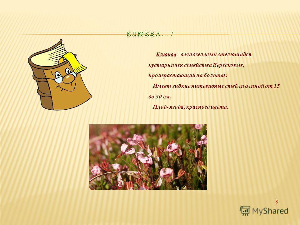 Клюква Клюква - вечнозеленый стелющийся кустарничек семейства Вересковые, произрастающий на болотах. Имеет гибкие нитевидные стебли длиной от 15 до 30 см. Плод- ягода, красного цвета. 8
