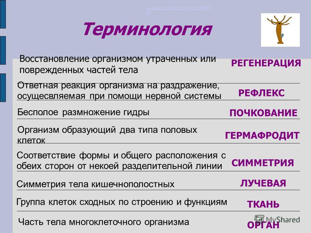 нервная система презентация ppt