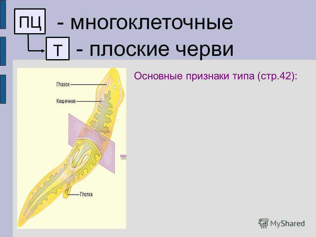 ПЦ - многоклеточные Т - плоские черви Основные признаки типа (стр.42):