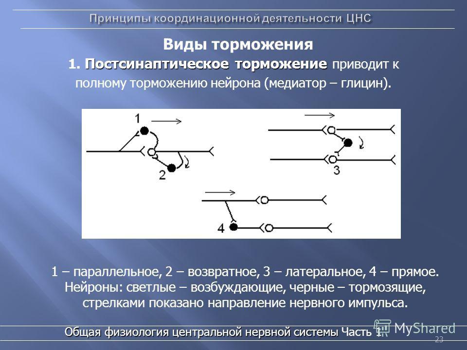 23 Виды торможения 1 – параллельное, 2 – возвратное, 3 – латеральное, 4 – прямое. Нейроны: светлые – возбуждающие, черные – тормозящие, стрелками показано направление нервного импульса. Постсинаптическое торможение 1. Постсинаптическое торможение при