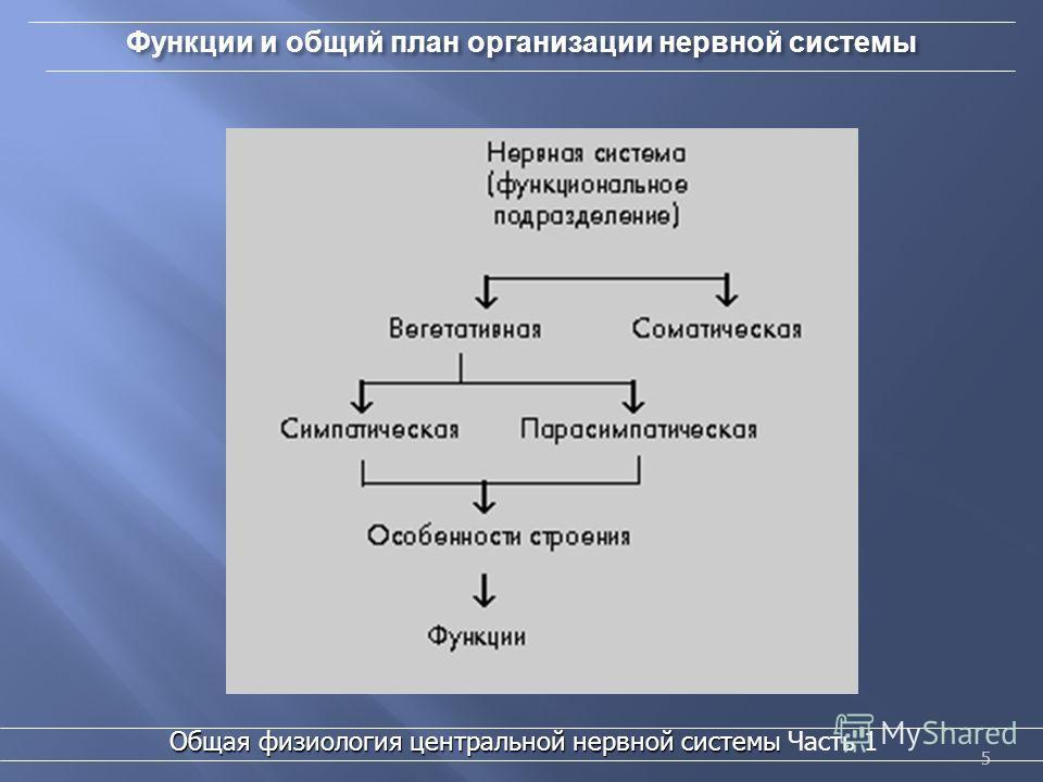 5 55 Функции и общий план организации нервной системы 5 Общая физиология центральной нервной системы Общая физиология центральной нервной системы Часть 1