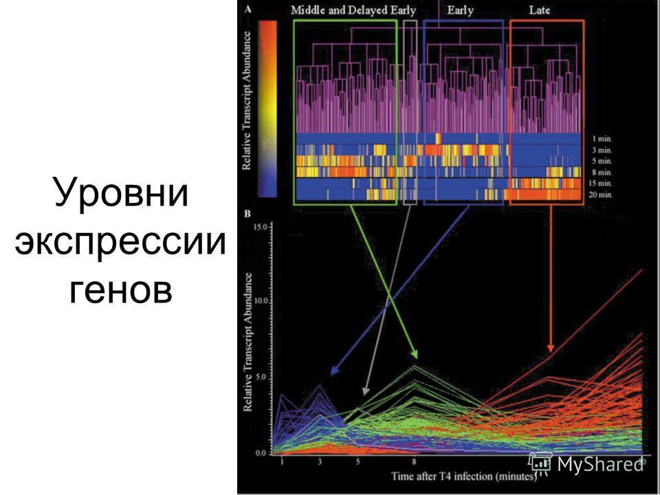 Уровни экспрессии генов