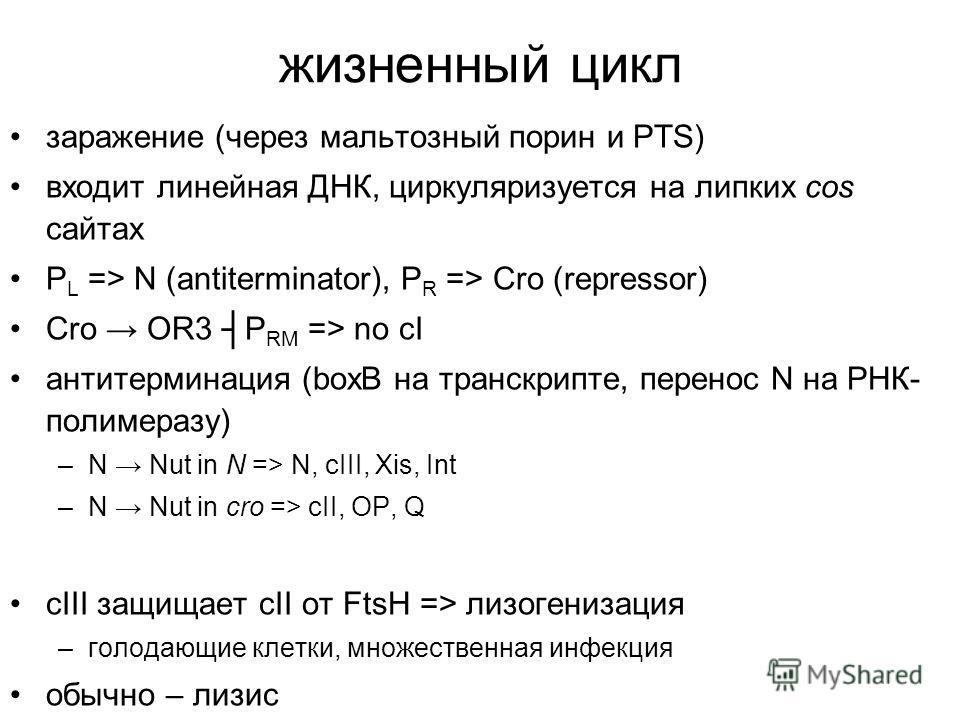 жизненный цикл заражение (через мальтозный порин и PTS) входит линейная ДНК, циркуляризуется на липких cos сайтах P L => N (antiterminator), P R => Cro (repressor) Cro OR3 P RM => no cI антитерминация (boxB на транскрипте, перенос N на РНК- полимераз