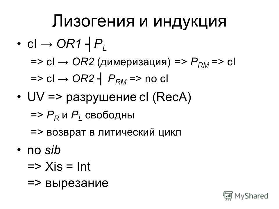 Лизогения и индукция сI OR1 P L => сI OR2 (димеризация) => P RM => cI => сI OR2 P RM => no cI UV => разрушение cI (RecA) => P R и P L свободны => возврат в литический цикл no sib => Xis = Int => вырезание