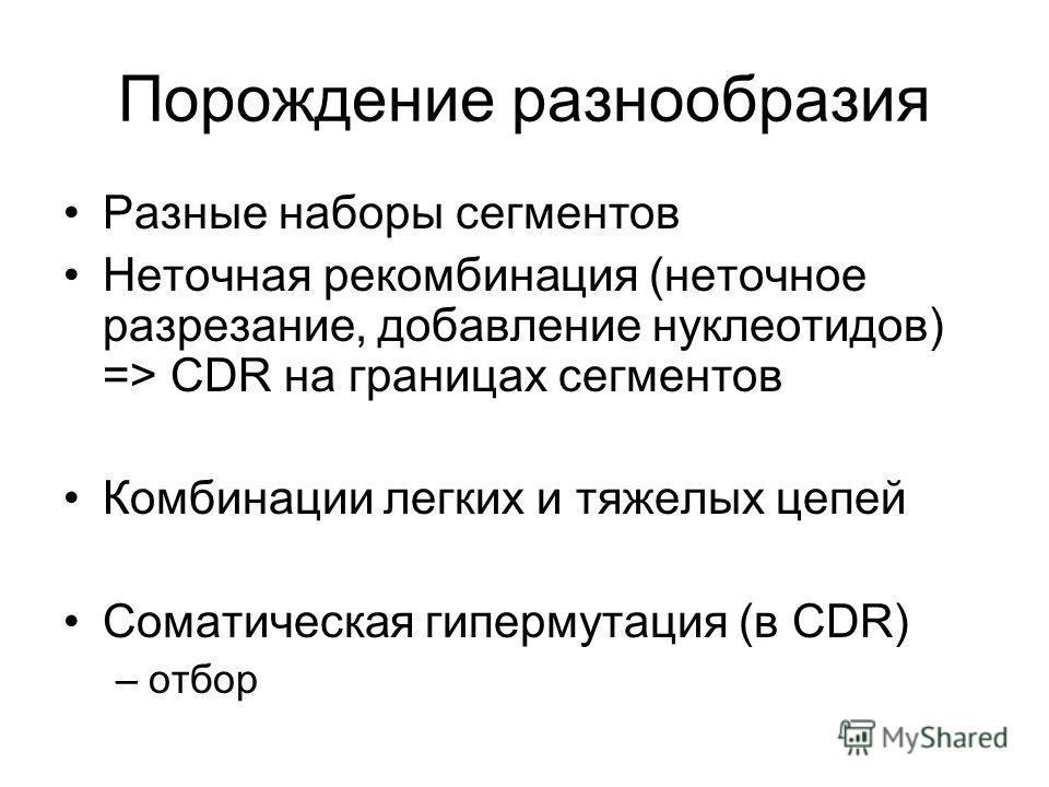 Порождение разнообразия Разные наборы сегментов Неточная рекомбинация (неточное разрезание, добавление нуклеотидов) => CDR на границах сегментов Комбинации легких и тяжелых цепей Соматическая гипермутация (в CDR) –отбор