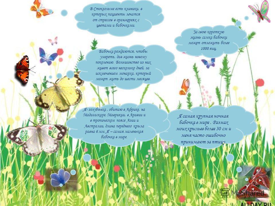 В Стокгольме есть клиники, в которых пациенты лечатся от стрессов в оранжереях с цветами и бабочками. За свою короткую жизнь самка бабочки может отложить более 1000 яиц. Бабочки рождаются, чтобы умереть, дав жизнь новому поколению. Большинство из них