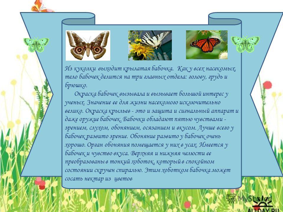 Из куколки выходит крылатая бабочка. Как у всех насекомых, тело бабочек делится на три главных отдела: голову, грудь и брюшко. Окраска бабочек вызывала и вызывает большой интерес у ученых. Значение ее для жизни насекомого исключительно велико. Окраск