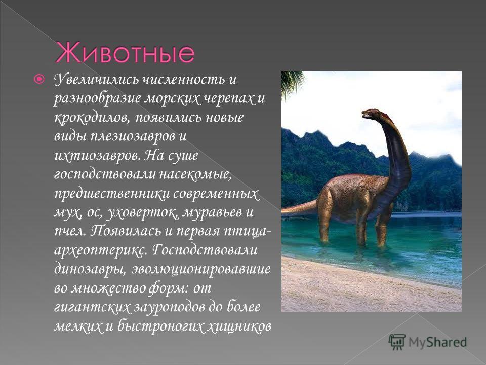 Увеличились численность и разнообразие морских черепах и крокодилов, появились новые виды плезиозавров и ихтиозавров. На суше господствовали насекомые, предшественники современных мух, ос, уховерток, муравьев и пчел. Появилась и первая птица- археопт