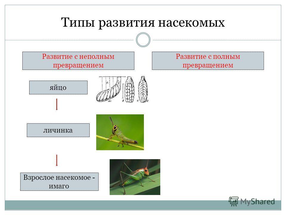 Типы развития насекомых Развитие с неполным превращением Развитие с полным превращением яйцо личинка Взрослое насекомое - имаго