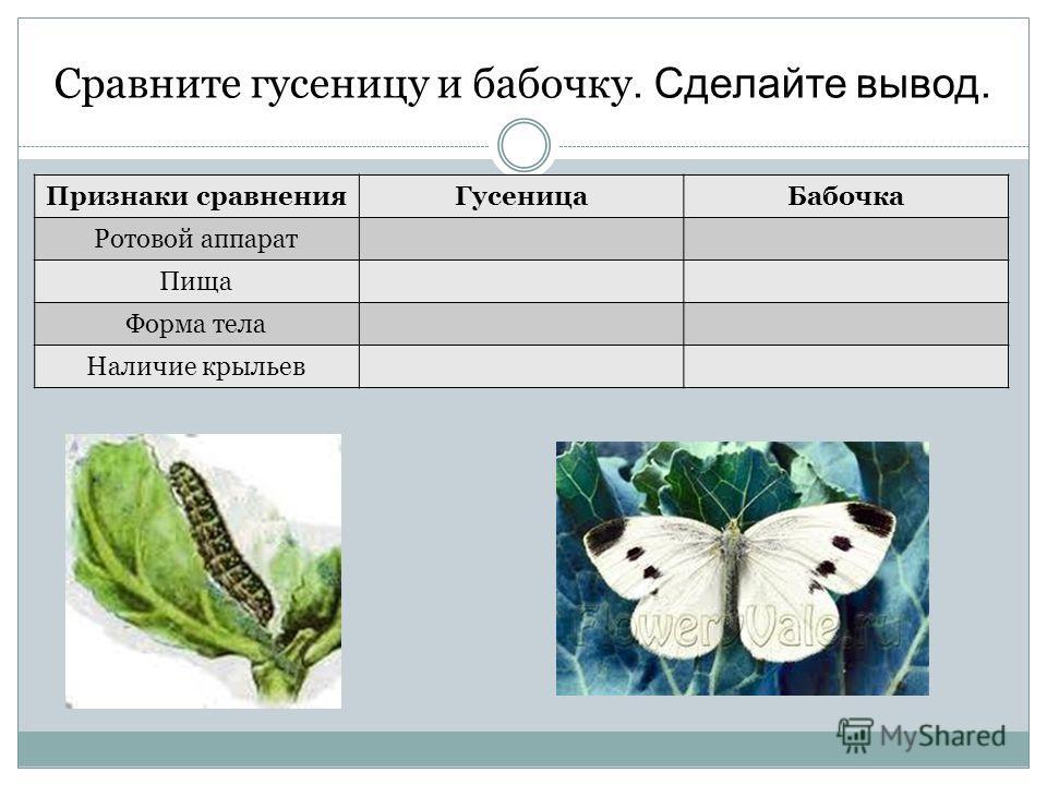 Сравните гусеницу и бабочку. Сделайте вывод. Признаки сравненияГусеницаБабочка Ротовой аппарат Пища Форма тела Наличие крыльев
