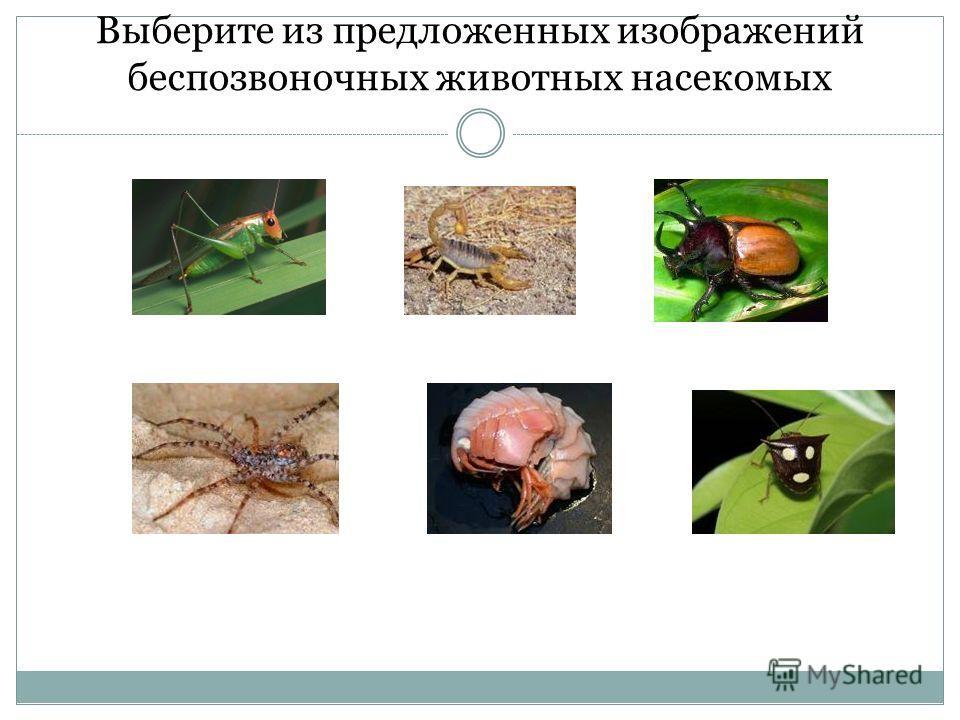 Выберите из предложенных изображений беспозвоночных животных насекомых