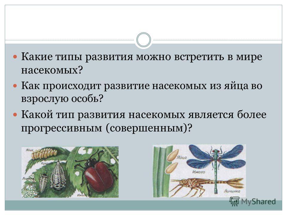 Какой тип развития насекомых