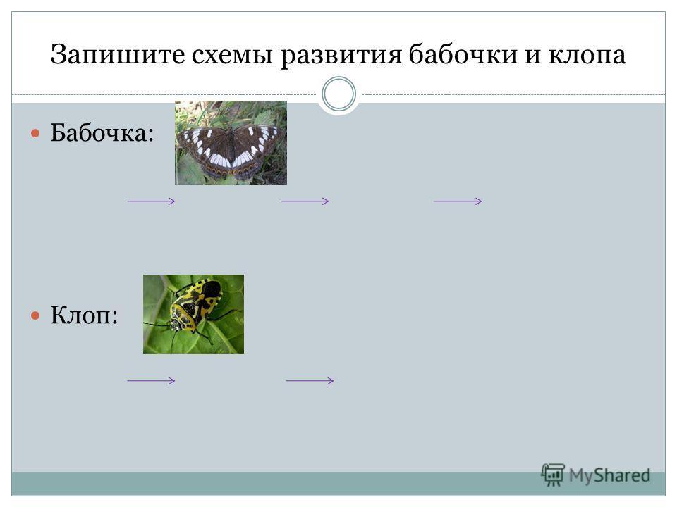 Запишите схемы развития бабочки и клопа Бабочка: Клоп:
