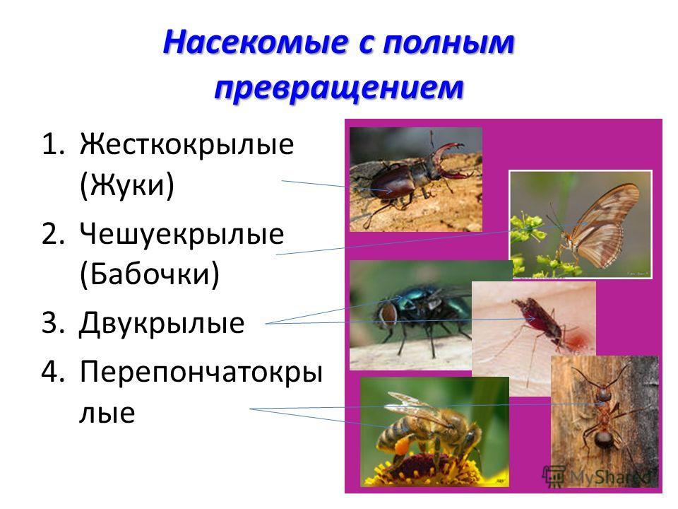 Насекомые с полным превращением 1.Жесткокрылые (Жуки) 2.Чешуекрылые (Бабочки) 3.Двукрылые 4.Перепончатокры лые