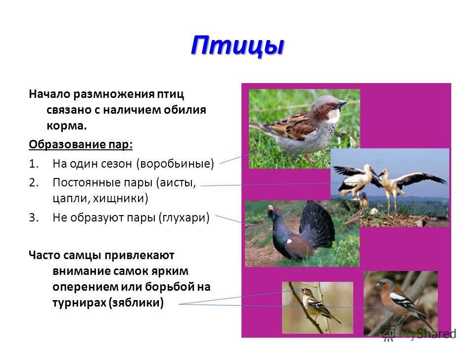 Птицы Начало размножения птиц связано с наличием обилия корма. Образование пар: 1.На один сезон (воробьиные) 2.Постоянные пары (аисты, цапли, хищники) 3.Не образуют пары (глухари) Часто самцы привлекают внимание самок ярким оперением или борьбой на т