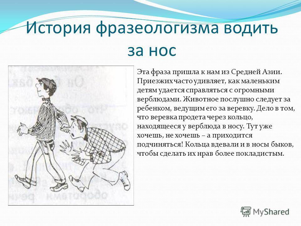 История фразеологизма водить за нос Эта фраза пришла к нам из Средней Азии. Приезжих часто удивляет, как маленьким детям удается справляться с огромными верблюдами. Животное послушно следует за ребенком, ведущим его за веревку. Дело в том, что веревк