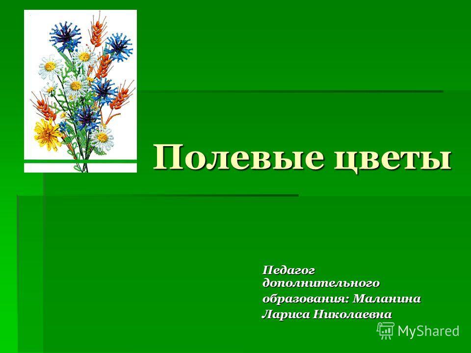 Полевые цветы Педагог дополнительного образования: Маланина Лариса Николаевна