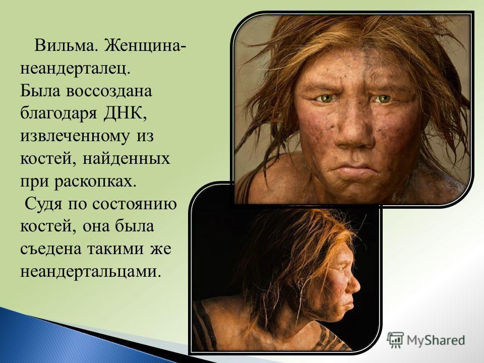 Вильма. Женщина- неандерталец. Была воссоздана благодаря ДНК, извлеченному из костей, найденных при раскопках. Судя по состоянию костей, она была съедена такими же неандертальцами.