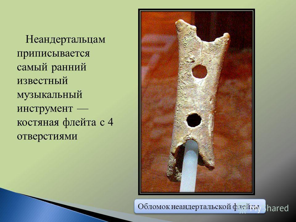 Обломок неандертальской флейты Неандертальцам приписывается самый ранний известный музыкальный инструмент костяная флейта с 4 отверстиями