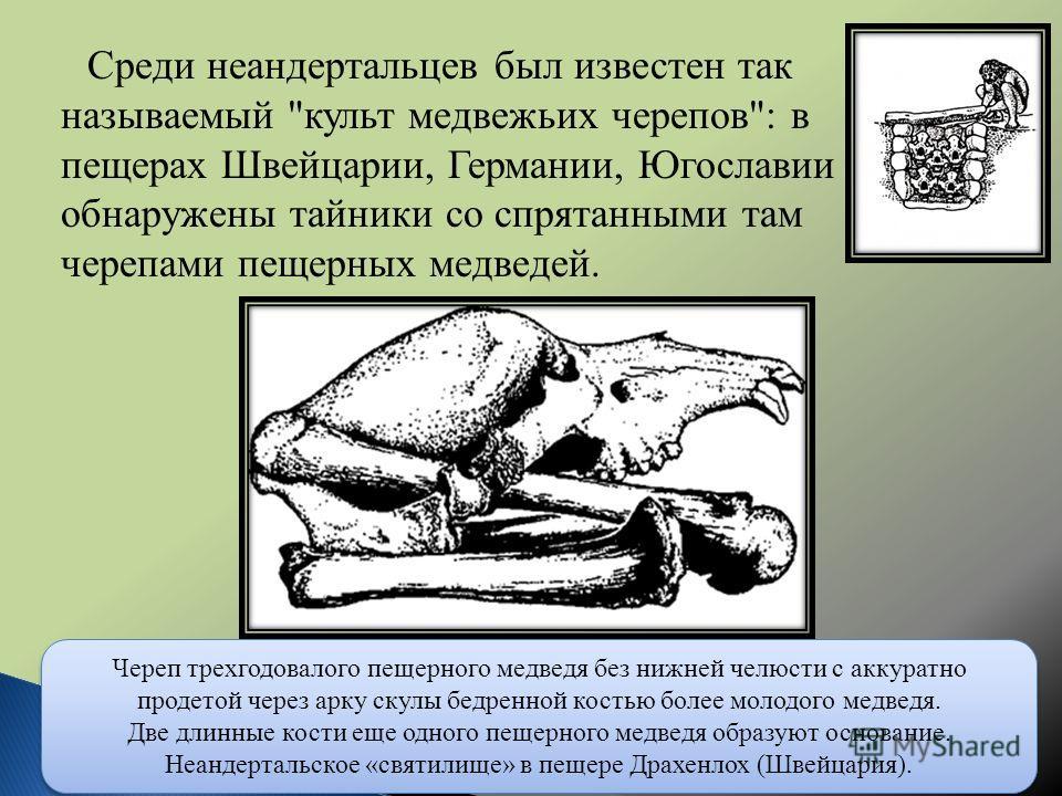 Среди неандертальцев был известен так называемый
