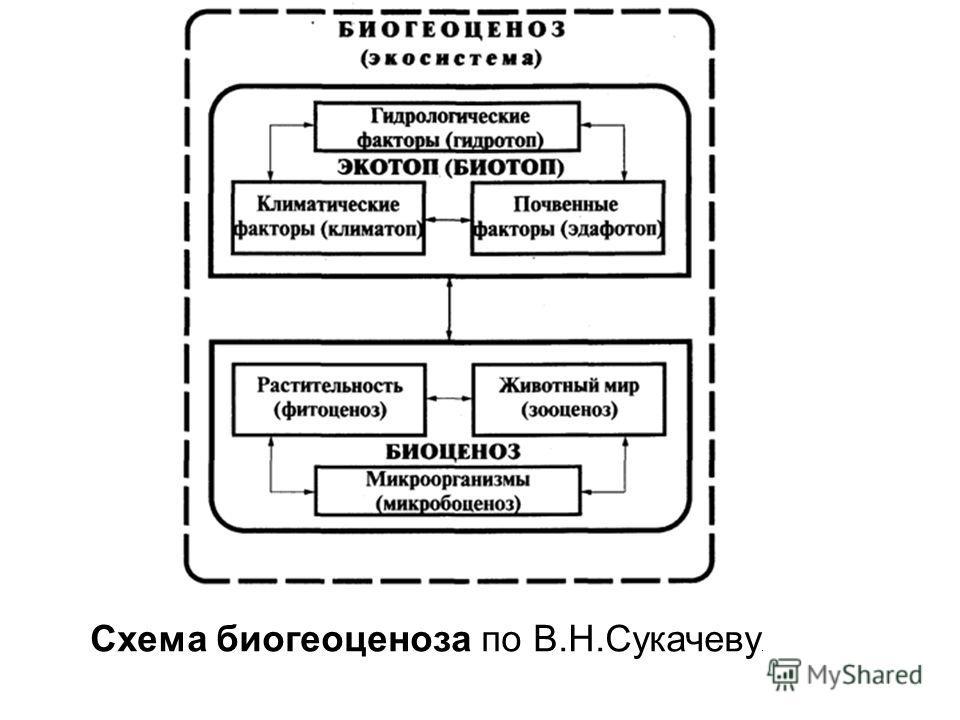 Схема биогеоценоза по