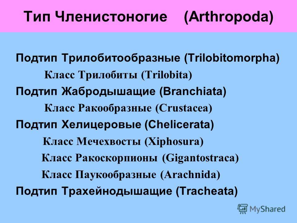 Тип Членистоногие (Arthropoda) Подтип Трилобитообразные (Trilobitomorpha) Класс Трилобиты (Trilobita) Подтип Жабродышащие (Branchiata) Класс Ракообразные (Crustacea) Подтип Хелицеровые (Chelicerata) Класс Мечехвосты (Xiphosura) Класс Ракоскорпионы (G