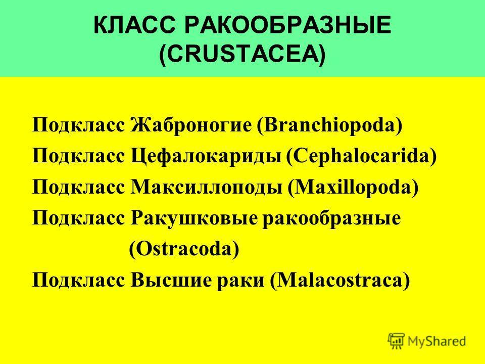 КЛАСС РАКООБРАЗНЫЕ (CRUSTACEA) Подкласс Жаброногие (Branchiopoda) Подкласс Цефалокариды (Cephalocarida) Подкласс Максиллоподы (Maxillopoda) Подкласс Ракушковые ракообразные (Ostracoda) Подкласс Высшие раки (Malacostraca)