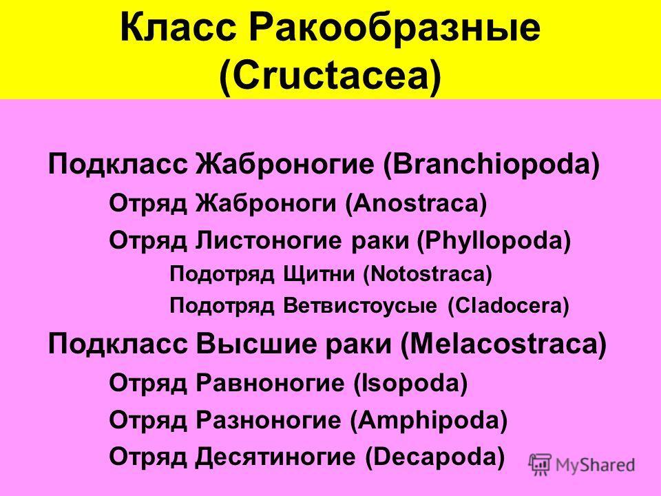 Класс Ракообразные (Cructacea) Подкласс Жаброногие (Branchiopoda) Отряд Жаброноги (Anostraca) Отряд Листоногие раки (Phyllopoda) Подотряд Щитни (Notostraca) Подотряд Ветвистоусые (Cladocera) Подкласс Высшие раки (Melacostraca) Отряд Равноногие (Isopo
