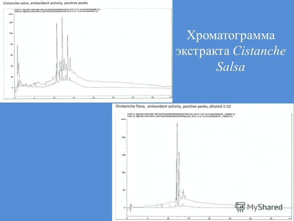 Хроматограмма экстракта Cistanche Salsa