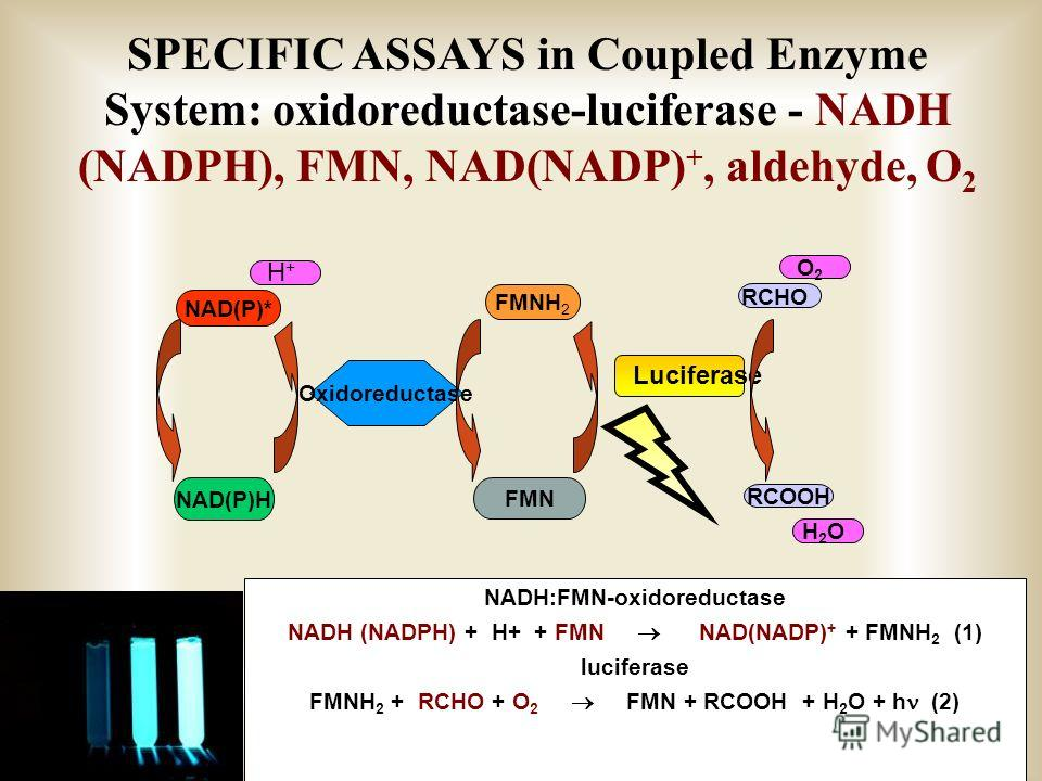 SPECIFIC ASSAYS in Coupled Enzyme System: oxidoreductase-luciferase - NADH (NADPH), FMN, NAD(NADP) +, aldehyde, O 2 FMN NAD(P)* NAD(P)H Oxidoreductase FMNH 2 Luciferase RCHO RCOOH O2O2 H2OH2O H+H+ NADH:FMN-oxidoreductase NADH (NADPH) + H+ + FMN NAD(N