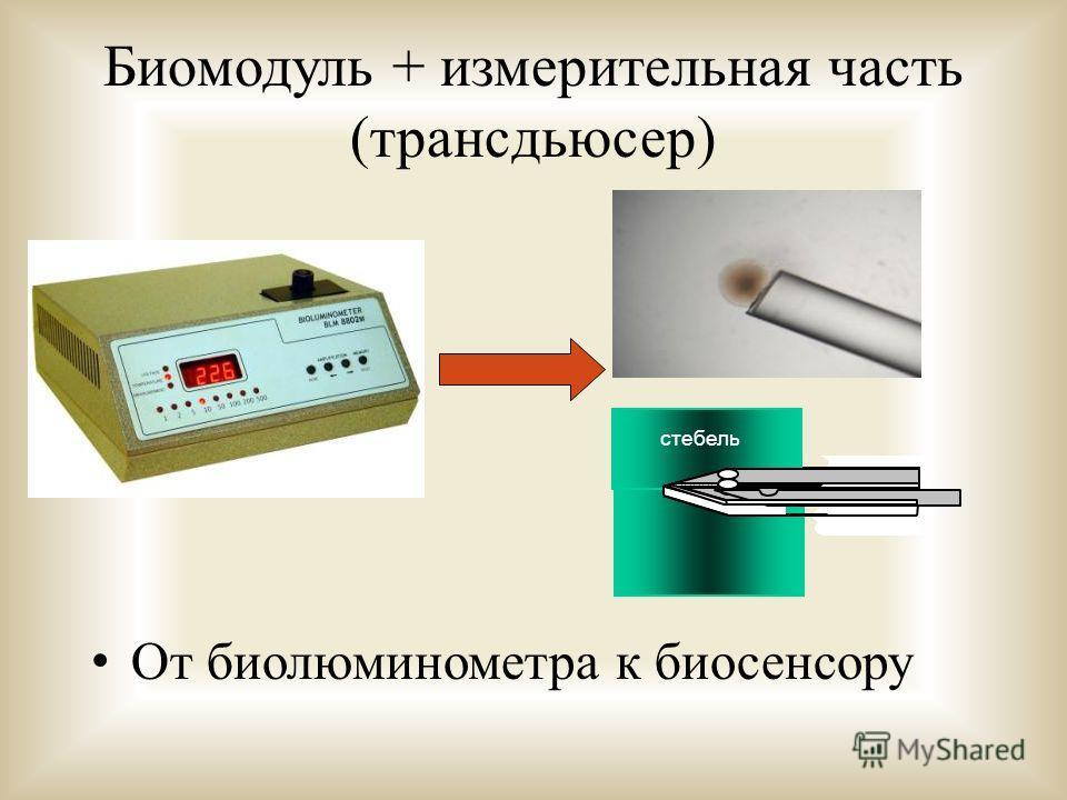 Биомодуль + измерительная часть (трансдьюсер) От биолюминометра к биосенсору Plant stem стебель