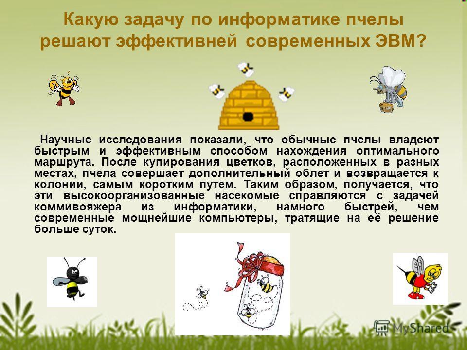 Какую задачу по информатике пчелы решают эффективней современных ЭВМ? Научные исследования показали, что обычные пчелы владеют быстрым и эффективным способом нахождения оптимального маршрута. После купирования цветков, расположенных в разных местах,