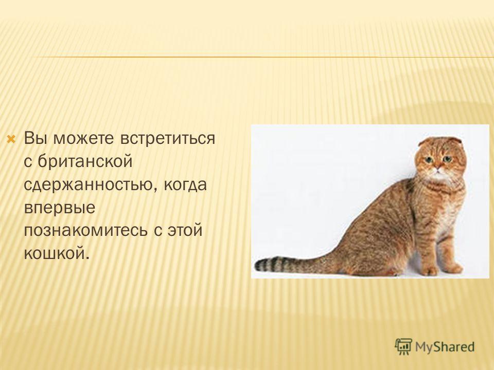 Вы можете встретиться с британской сдержанностью, когда впервые познакомитесь с этой кошкой.