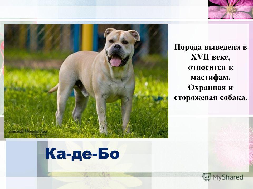 Ка-де-Бо Порода выведена в XVII веке, относится к мастифам. Охранная и сторожевая собака.