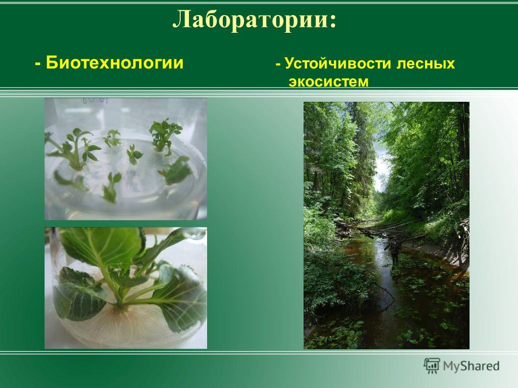 Лаборатории: - Биотехнологии - Устойчивости лесных экосистем