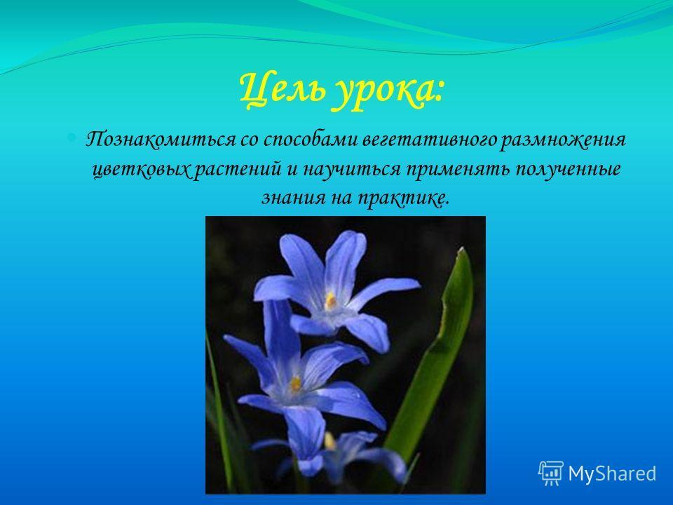 Цель урока: Познакомиться со способами вегетативного размножения цветковых растений и научиться применять полученные знания на практике.