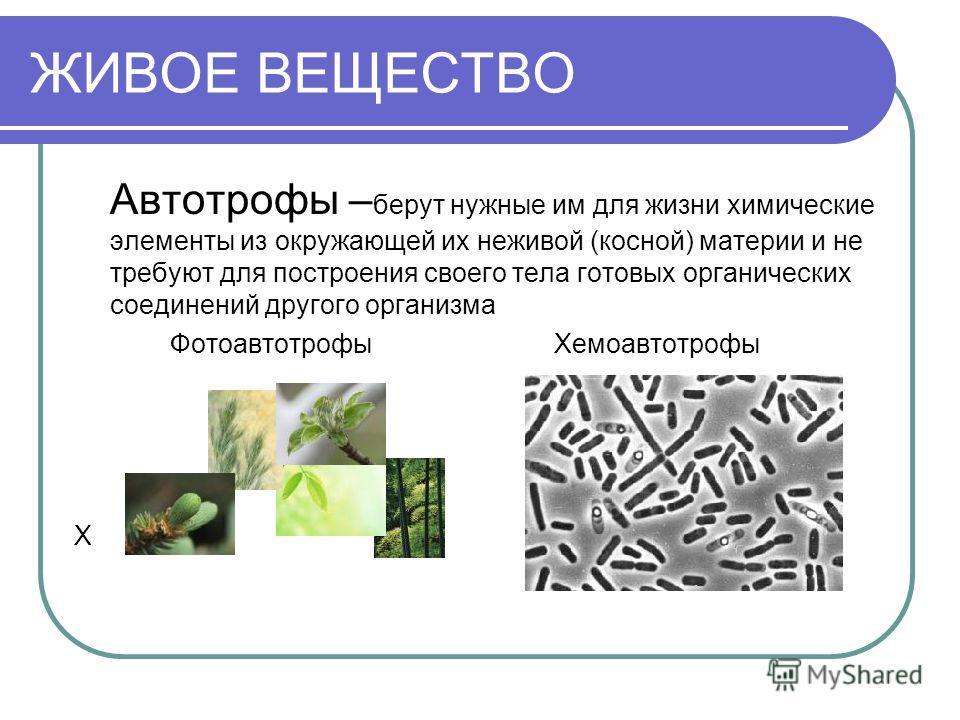 ЖИВОЕ ВЕЩЕСТВО Автотрофы – берут нужные им для жизни химические элементы из окружающей их неживой (косной) материи и не требуют для построения своего тела готовых органических соединений другого организма ФотоавтотрофыХемоавтотрофы Х