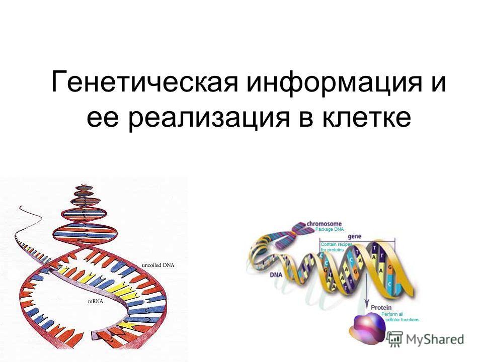 Генетическая информация и ее реализация в клетке