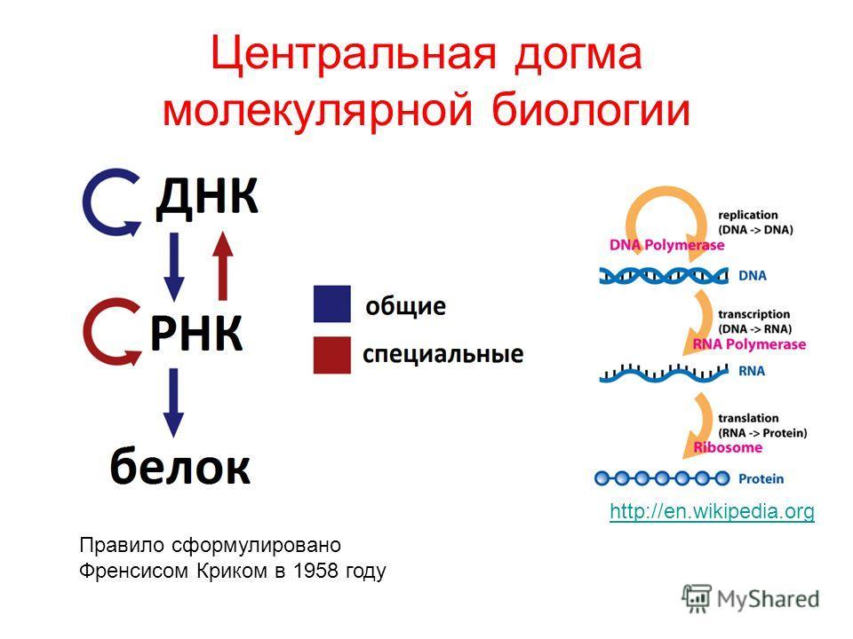 Центральная догма молекулярной биологии Правило сформулировано Френсисом Криком в 1958 году http://en.wikipedia.org
