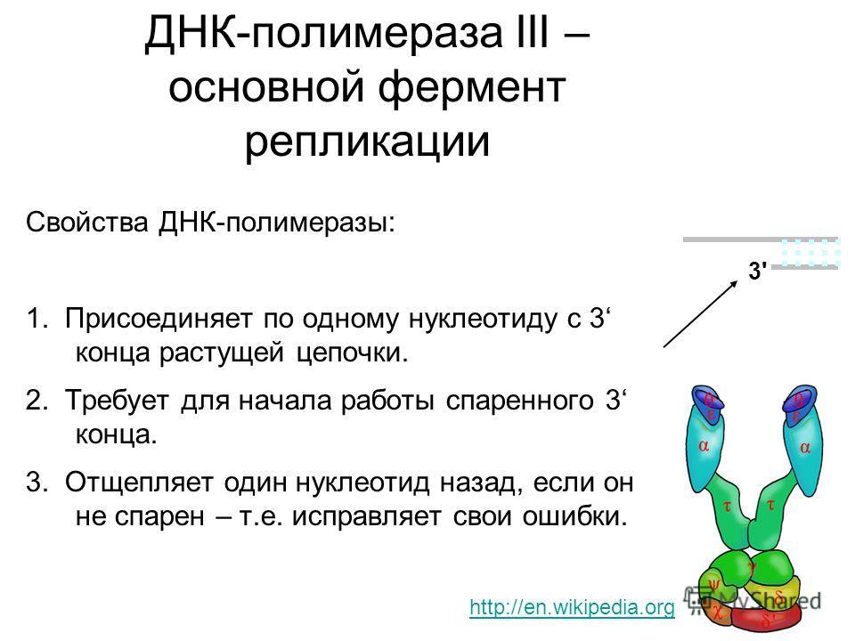 ДНК-полимераза III – основной фермент репликации Свойства ДНК-полимеразы: 1. Присоединяет по одному нуклеотиду с 3 конца растущей цепочки. 2. Требует для начала работы спаренного 3 конца. 3. Отщепляет один нуклеотид назад, если он не спарен – т.е. ис