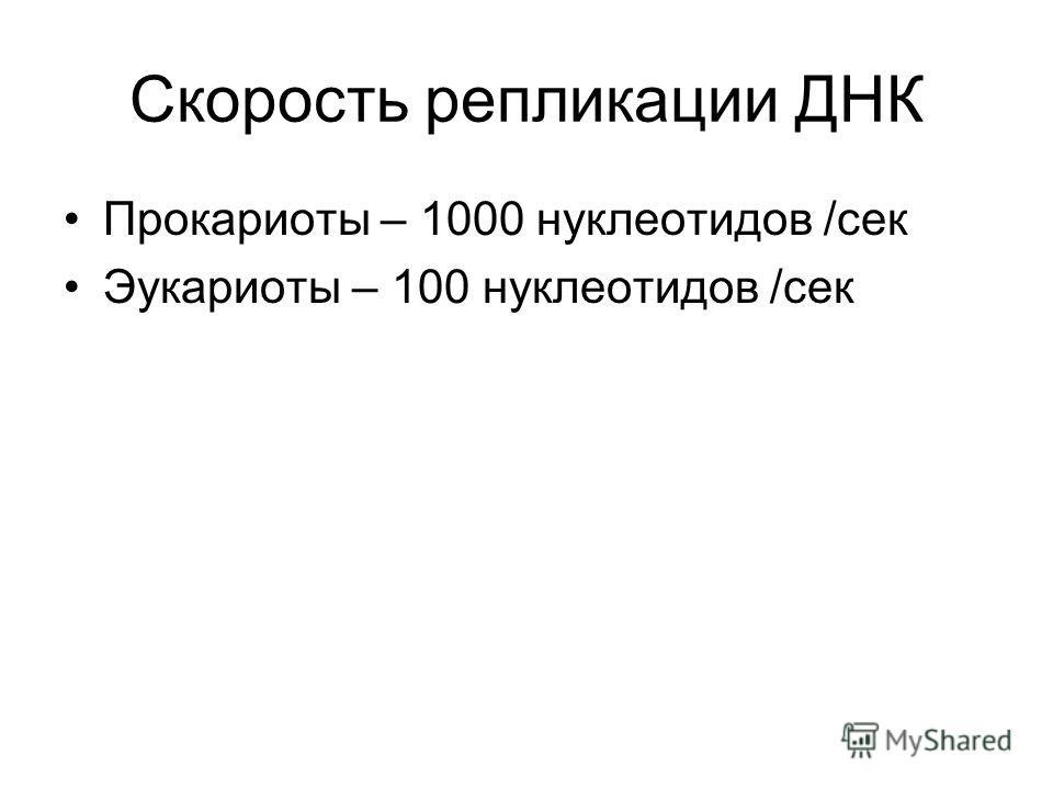 Скорость репликации ДНК Прокариоты – 1000 нуклеотидов /сек Эукариоты – 100 нуклеотидов /сек