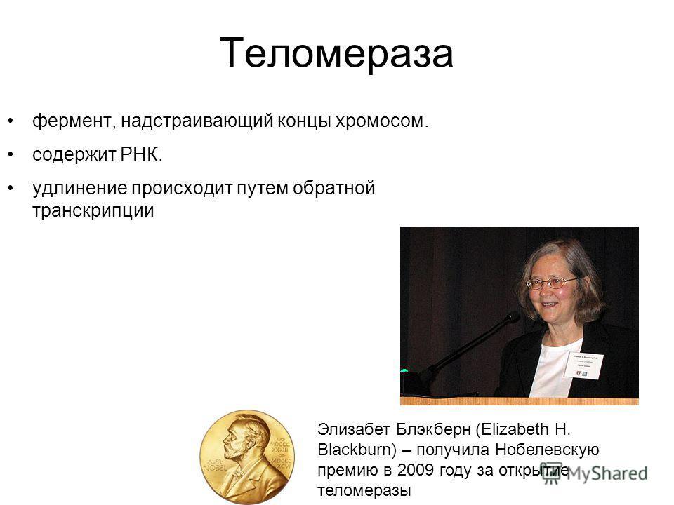 Теломераза фермент, надстраивающий концы хромосом. содержит РНК. удлинение происходит путем обратной транскрипции Элизабет Блэкберн (Elizabeth H. Blackburn) – получила Нобелевскую премию в 2009 году за открытие теломеразы