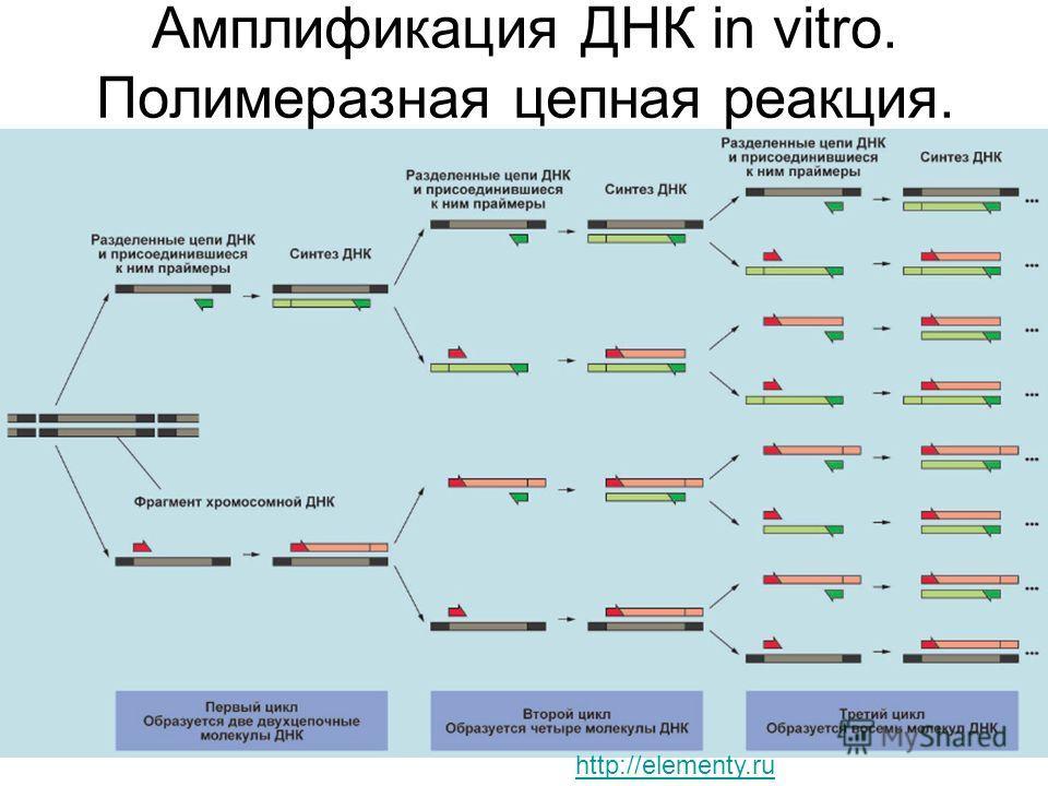 Амплификация ДНК in vitro. Полимеразная цепная реакция. http://elementy.ru