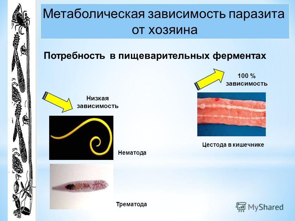 Метаболическая зависимость паразита от хозяина Потребность в пищеварительных ферментах Нематода Трематода Низкая зависимость Цестода в кишечнике 100 % зависимость
